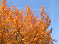 Herbstfarben-2